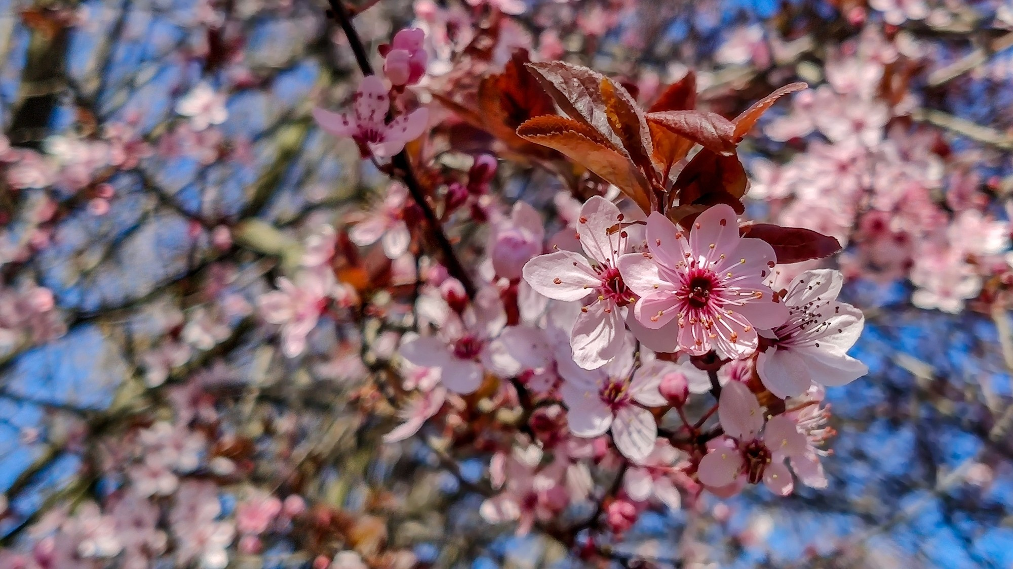 Kwitnąca wiosna - zdjęcie 1