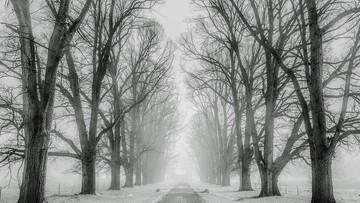 IMGW ostrzega przed silnym wiatrem i opadami śniegu. Może nawet zagrzmieć