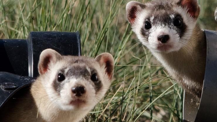 """Ustawa o ochronie zwierząt. """"Porozumienie nie zajęło jeszcze stanowiska"""""""