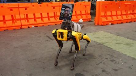 Roboty SpotMini od Boston Dynamics pomagają w walce z pandemią CoVID-19 w USA