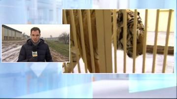 """""""Cuda się dzieją"""". Poznańskie zoo dostanie miejsce na """"Azyl dla Nieumarłych"""""""