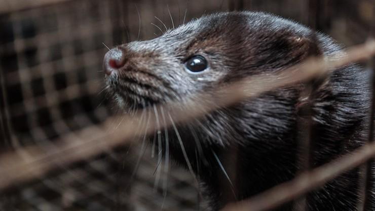 Buda: marszałek Sejmu wszczęła procedurę notyfikacji noweli o ochronie zwierząt