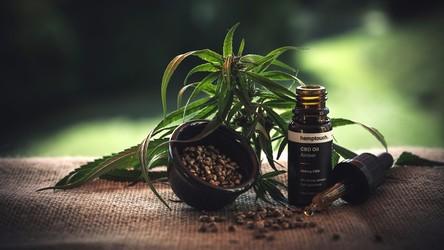 Pierwsze kliniczne testy udowadniają, że uzależnienie od marihuany można leczyć marihuaną