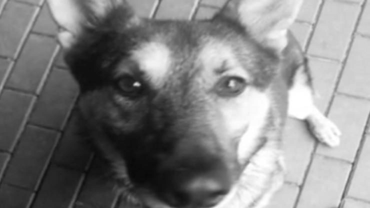 Prokuratura sprawdzi, kto odpowiada za awarię, w której zginęły policyjne psy. Ruszyło śledztwo