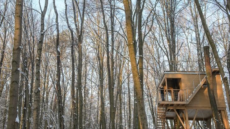 Myszka: Zbudowałem dla dzieci domek na drzewie