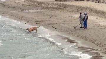 Gdynia-Orłowo - plażę poszerzoną za 2,5 mln zł zabrał sztorm