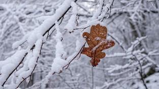 04-12-2019 11:00 Pogoda na grudzień: Kontynuacja jesiennej pogody, a może nadejście prawdziwej zimy? Sprawdź!