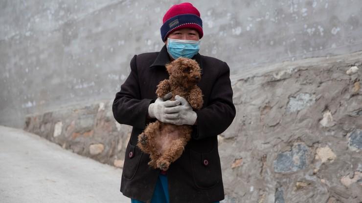 Nowe zagrożenie związane z epidemią koronawirusa. Kwarantanna dla psów i kotów