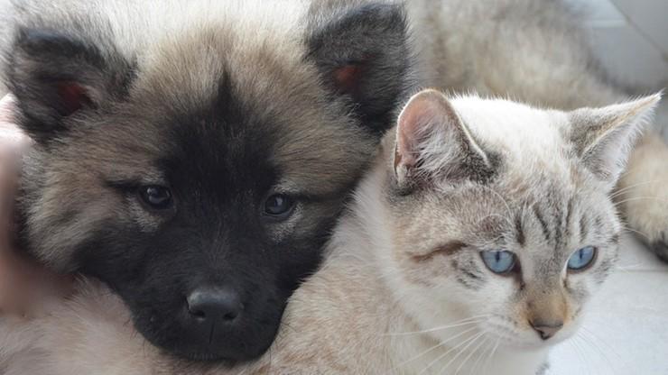 Chińskie władze namawiają do zabijania zwierząt domowych w związku z koronawirusem