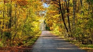 26.10.2020 00:00 Październikowy spacer wśród natury