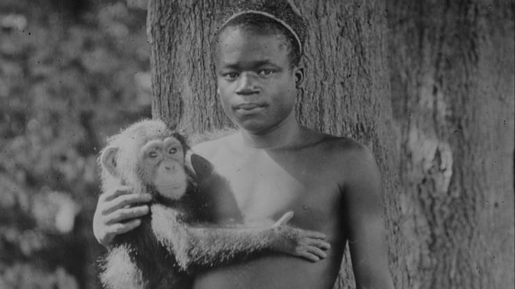 Amerykańskie zoo przeprasza za pokazywanie Afrykanina w 1906 r.