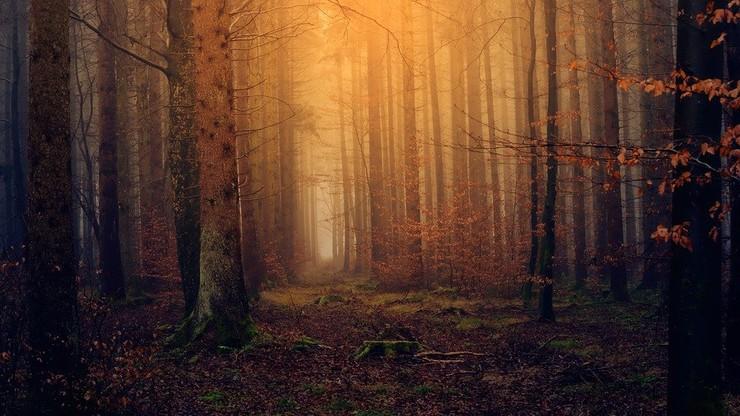 Podkarpacie: grzybiarz znalazł w lesie ludzką głowę
