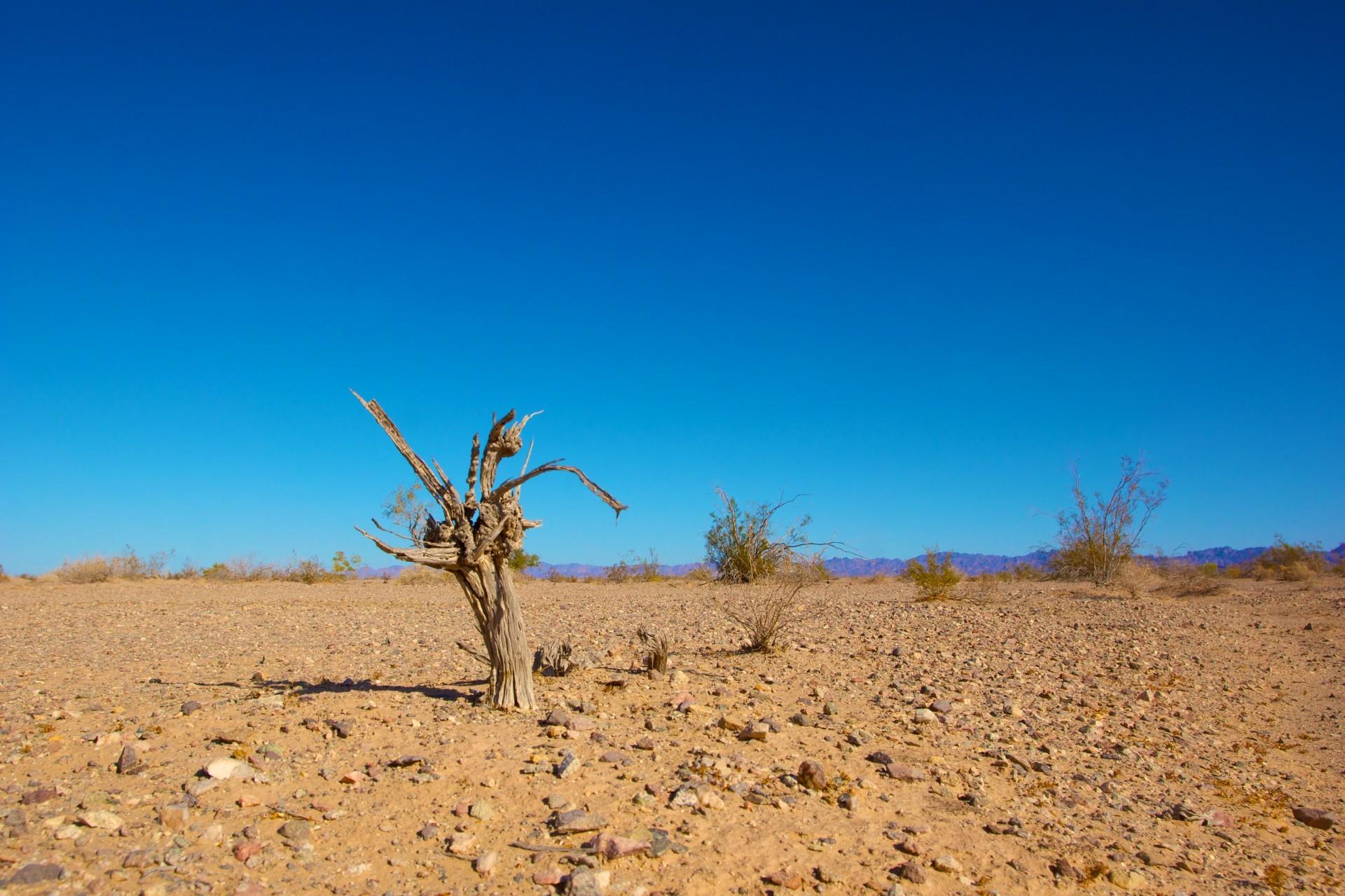 """""""Zmiany klimatu uderzają mocniej i wcześniej, niż to szacowano"""""""